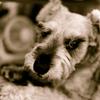 my pretty dog # 13
