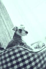 my pretty dog # 233
