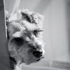 my pretty dog # 62