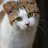 吾輩は猫である、ニャー # 78