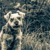 my pretty dog # 21