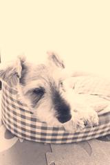 my pretty dog # 236
