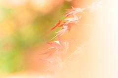 ファジーな紅葉