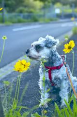 my pretty dog # 209