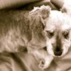 my pretty dog # 4