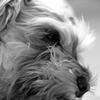 my pretty dog # 121