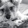 my pretty dog # 114