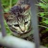 吾輩は猫である、ニャー # 18