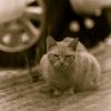 吾輩は猫である、ニャー # 71