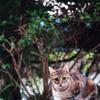 吾輩は猫である、ニャー # 65