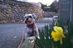 my pretty dog # 135