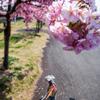 桜の下の散歩