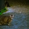吾輩は猫である、ニャー # 15 ~太り気味~