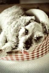 my pretty dog # 248