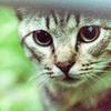 吾輩は猫である、ニャー # 21