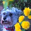 my pretty dog # 176