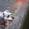 my pretty dog # 9