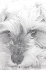 my pretty dog # 129
