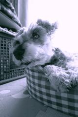 my pretty dog # 234