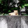 吾輩は猫である、ニャー # 2