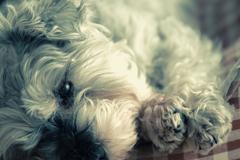 my pretty dog # 185