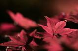 紅葉散歩 Ⅷ