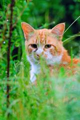 吾輩は猫である、ニャー # 331