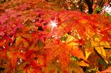 錦繍の秋 ⑫