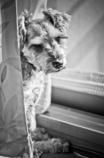my pretty dog # 63