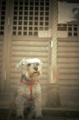 my pretty dog # 136