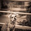 my pretty dog # 71