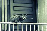 吾輩は猫である、ニャー # 43