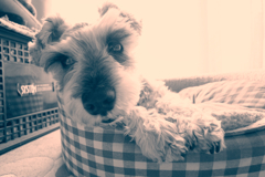 my pretty dog # 235