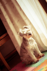 my pretty dog # 53