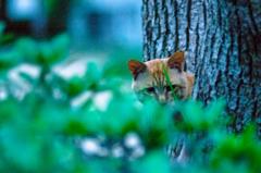 吾輩は猫である、ニャー # 44