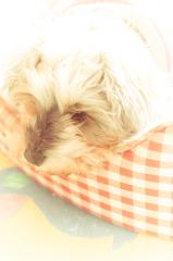 my pretty dog # 131