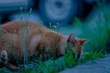 吾輩は猫である、ニャー # 59