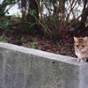 吾輩は猫である、ニャー # 64