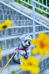 my pretty dog # 211