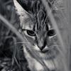 吾輩は猫である、ニャー # 53