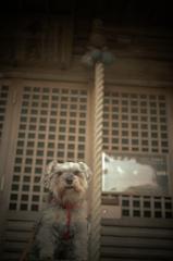 my pretty dog # 137
