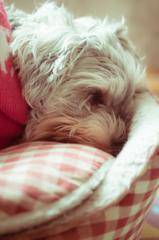 my pretty dog # 132