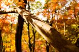 錦繍の秋 ⑬