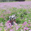 my pretty dog # 8 〜レンゲ畑にて〜