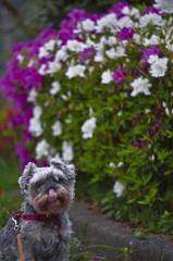 my pretty dog # 189