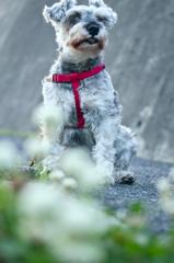 my pretty dog # 207