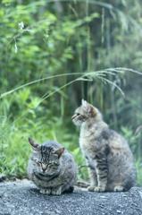 吾輩は猫である、ニャー # 235