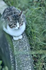 吾輩は猫である、ニャー # 260