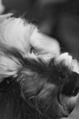 my pretty dog # 138