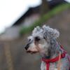 my pretty dog # 68